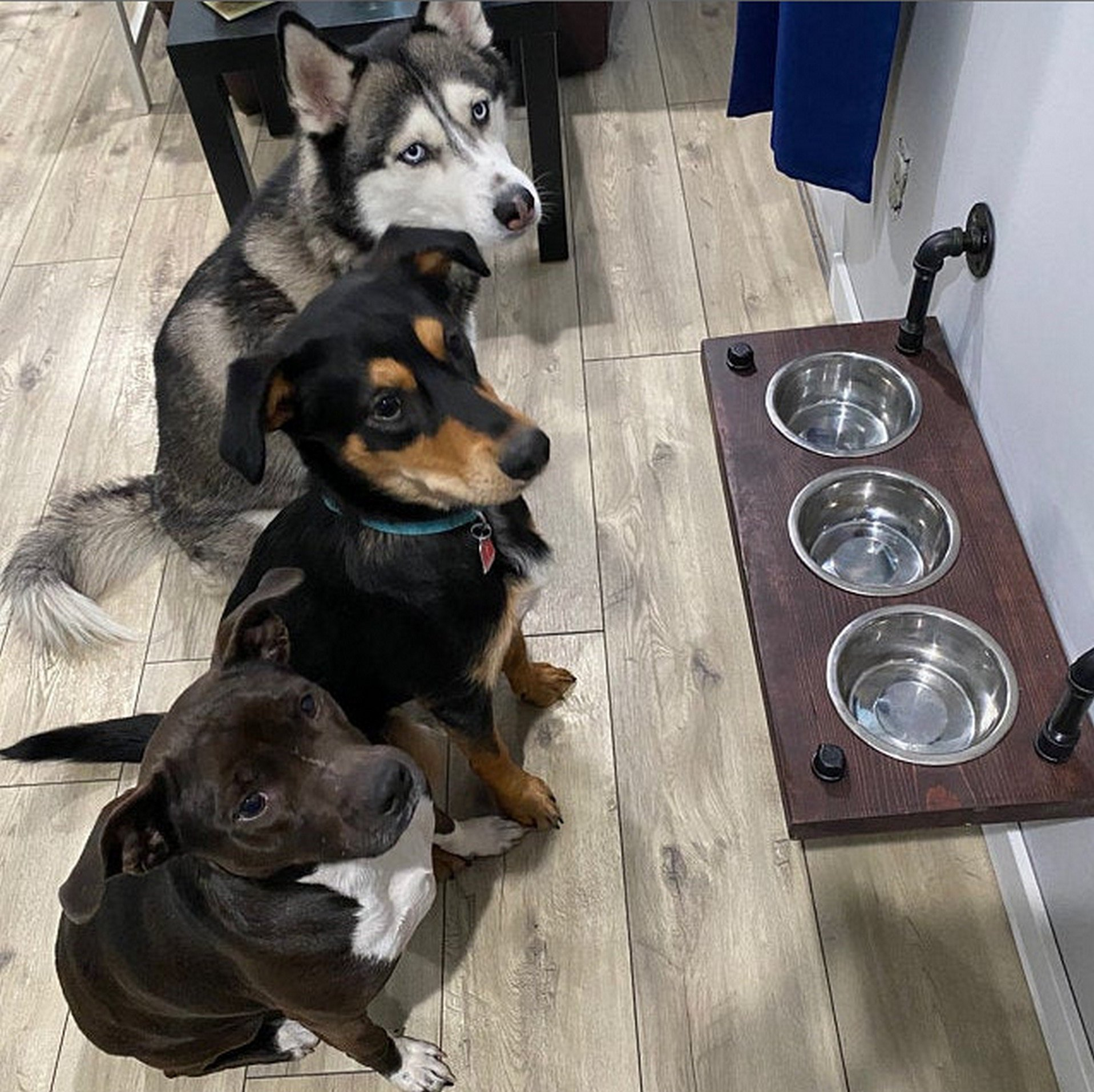 https://www.pipeworkpieces.com/wp-content/uploads/2020/10/floating-dog-bowl-feeder-farmhouse-style-feeder-raised-dog-bowl-feeder-new-lower-prices-5f7b8d62.jpg